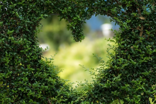 heart shaped hole in shrub