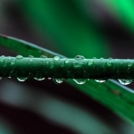 close up of a dew soaked stem