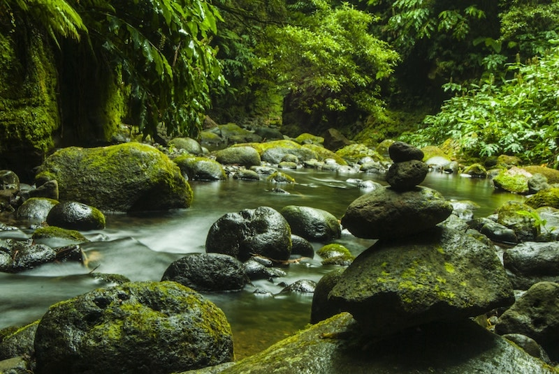 moss covered zen stones in river flowing through green lush forest