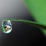 dew drop balancing at end of grass blade