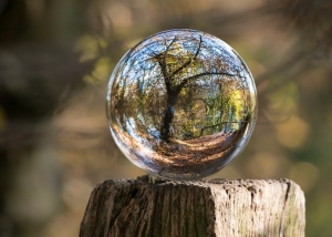 crystal ball in forrest