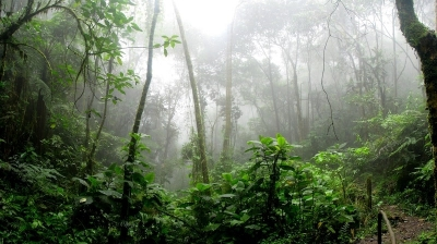 view of Amazon rain forest on a misty day